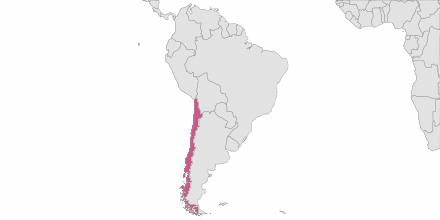 Envoi de SMS Chili