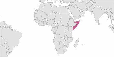 Envoi de SMS Somalie