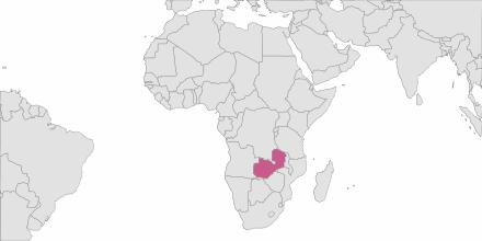Envoi de SMS Zambie