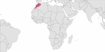 SMS sending Morocco