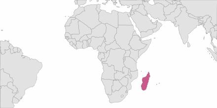 SMS sending Madagascar