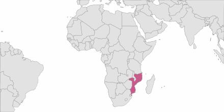 Envoi de SMS Mozambique
