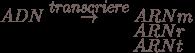 ADN \overset{transcriere}{\rightarrow} ARNm \\ \hspace{35pt}\hspace{35pt}\hspace{62pt}ARN r \\<br /><br /> \hspace{35pt}\hspace{35pt}\hspace{62pt}ARN t